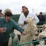 Identificarea sI inregistrarea animalelor