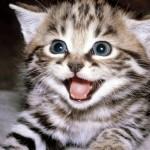 Pisicile, un antistres puternic si eficient