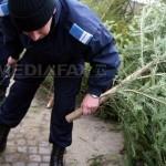 Pomi de Crăciuni confiscaţi în urma unor acţiuni desfăşurate în pieţele băcăuane