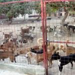 Multe nereguli la adapostul de caini din Onesti