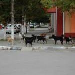 Maidanezii din Bacău, în adăposturi sau adoptaţi de iubitorii de animale