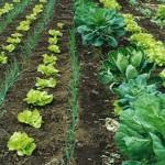 Invata cum poti avea o afacere de succes in agricultura ecologica