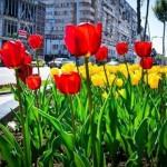 Incredibil! Un nemțean a fost prins în timp ce sustrăgea flori de pe spațiul public din Bacău