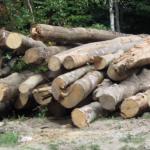 Depistat în timp ce sustrăgea material lemnos