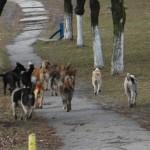 Bacău/ Urmare a disputei între Primărie și DSVSA: trei oameni mușcați de câini în medie, pe zi