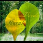 """Concurs regional """"Padurea-aurul verde al Terrei"""" – editia a II a"""