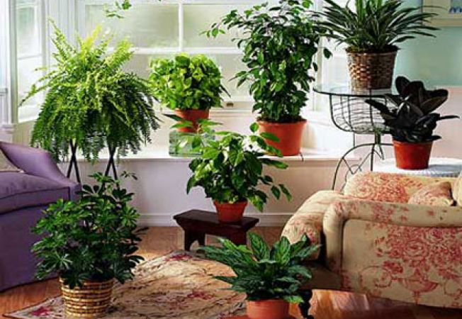 Plante care purifica aerul in casa ziarul observator de for Plante de interior