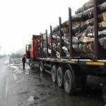 Acțiune de verificare a legalității transportului, prelucrării și comercializării materialului lemnos