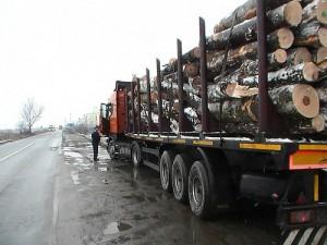 tir-lemn-300x225
