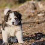 Percheziție la bănuit de furtul unui câine