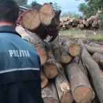 Transporta material lemnos pentru care nu deţinea documente de provenienţă