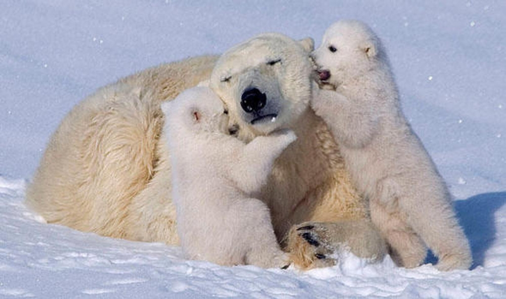 family--onegreenplanet-org_79098600