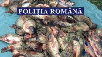 Peste 500 kg peşte sustras dintr-o fermă piscicolă depistat de poliţişti