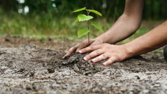 """Programul """"Prima împădurire"""": Începe o nouă sesiune de depunere a proiectelor. Care sunt condiţiile pentru a primi sprijin financiar"""
