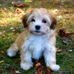 Obligațiile legale ale proprietarilor de câini