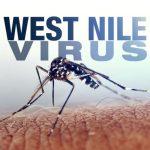 Muşcături de ţânţari – cum să ne ferim de infectarea cu West Nile