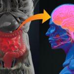 Stomacul, al doilea creier: cât de importantă este gestionarea emoţiilor pentru sănătate