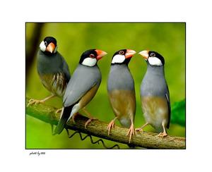 Vivariul: Minunata lume a pasarilor