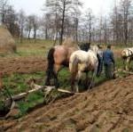 Toti micii producatorii de legume, fructe, cereale si material lemnos vor plati impozit pe venit