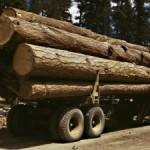 Peste 17 mc material lemnos confiscati de polițiștii băcăuani