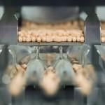 Vitamina B3 oferă o alternativă de luptă împotriva infecţiilor
