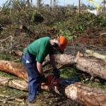 Depistat în timp ce tăia ilegal arbori, de pe islazul comunal