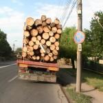 Acțiune de verificare a transportului de material lemnos pe Valea Muntelui