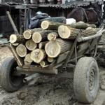 Transporta arbori tăiați și sustrași din pădurea unui cetățean din Slănic Moldova