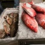 Consumul de peşte favorizează longevitatea