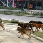 Cum au rezolvat Europa şi SUA problema câinilor maidanezi. Vestul a optat pentru eutanasiere, Estul mizează pe sterilizare şi adăposturi