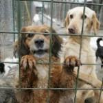 Proiectul de lege privind cainii fara stapan a fost adoptat