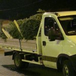 Peste 500 pomi de Craciun confiscati de politistii bacauani!