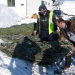 Inca 300 de pomi de Crăciun confiscați de polițiști