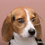 Recomandări pentru proprietarii de câini