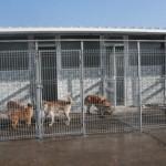 Acţiune ANSVSA pentru soluţionarea situaţiei de la Adăpostul Public pentru câinii fără stăpân din Bacău