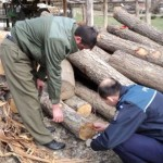 Cercetați pentru tăiere ilegală și furt de arbori