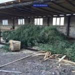 Peste 400 de pomi de Crăciun, confiscați de polițiștii băcăuani