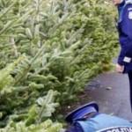Pomi de Crăciun, confiscați de polițiști