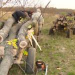 Depistaţi în flagrant şi cercetaţi pentru tăiere ilegală şi furt de arbori