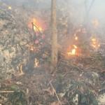 Intervenție rapidă a pompierilor salvatori băcăuani