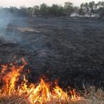 Incendiu vegetație uscată
