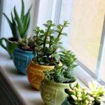 Așa împrospătezi aerul din casa ta într-un mod sănătos!