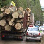 Sancţiuni aplicate de poliţişti pentru transport de material lemnos fără documente