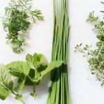 Plante care tratează afecţiunile digestive
